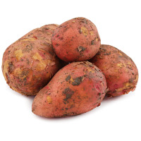 Картофель Краснодар красный